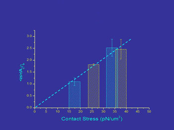 contact stress effects on bond formation
