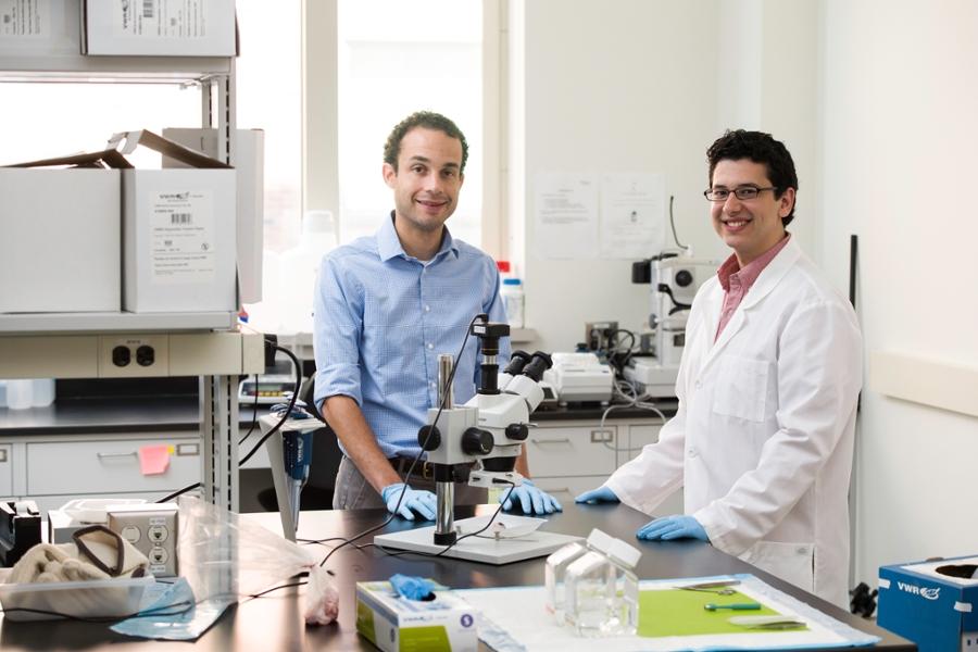 biomedical engineering university  rochester