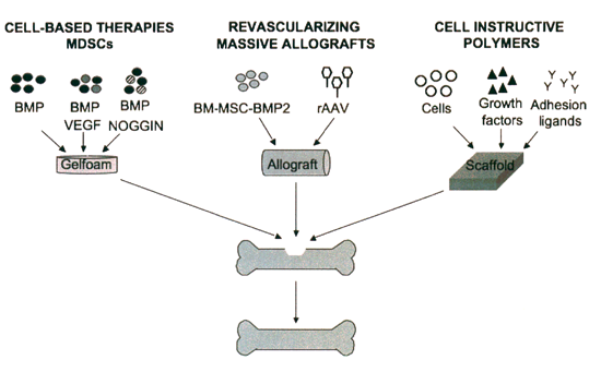 schematic model of strategies that combine stem cell technology and gene therapy